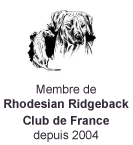 Rhodhesian Ridgeback - Club de France